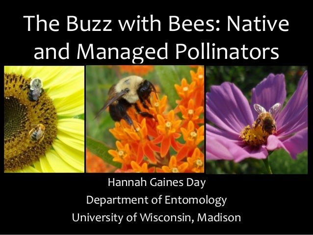 The Buzz with Bees: Native and Managed Pollinators Hannah Gaines Day Department of Entomology University of Wisconsin, Mad...