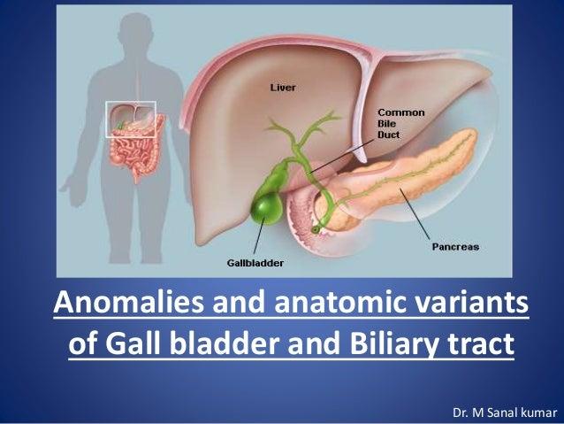 Biliary tract anatomy