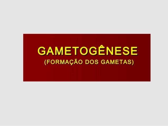 Gametogênese (espermatogênese) Células germinativas (2n) Período germinativo Período de crescimento Período de maturação P...