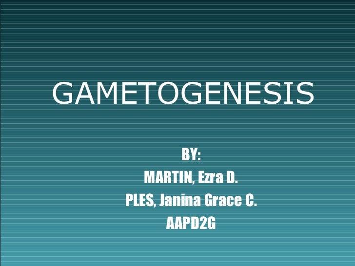 Gametogenesis ppt