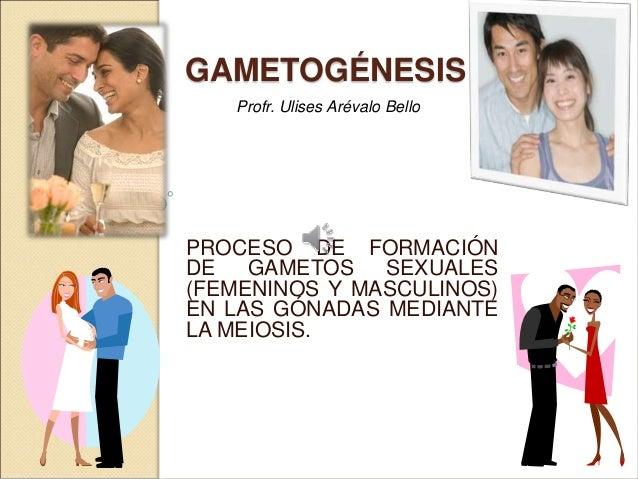 GAMETOGÉNESIS  Profr. Ulises Arévalo Bello  PROCESO DE FORMACIÓN  DE GAMETOS SEXUALES  (FEMENINOS Y MASCULINOS)  EN LAS GÓ...
