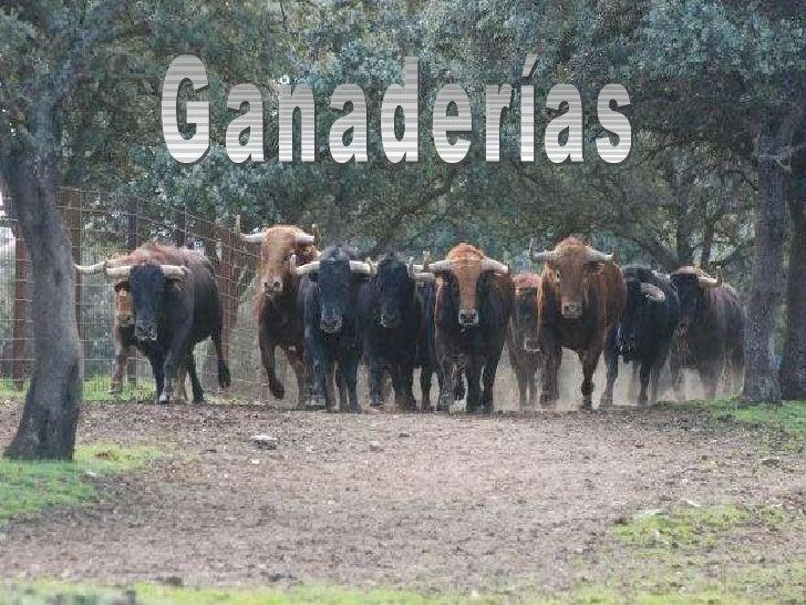 ganaderias toros: