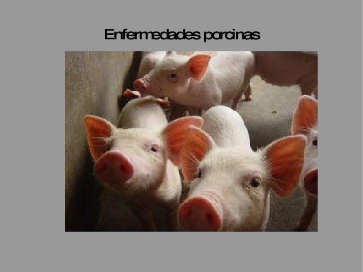 Enfermedades porcinas