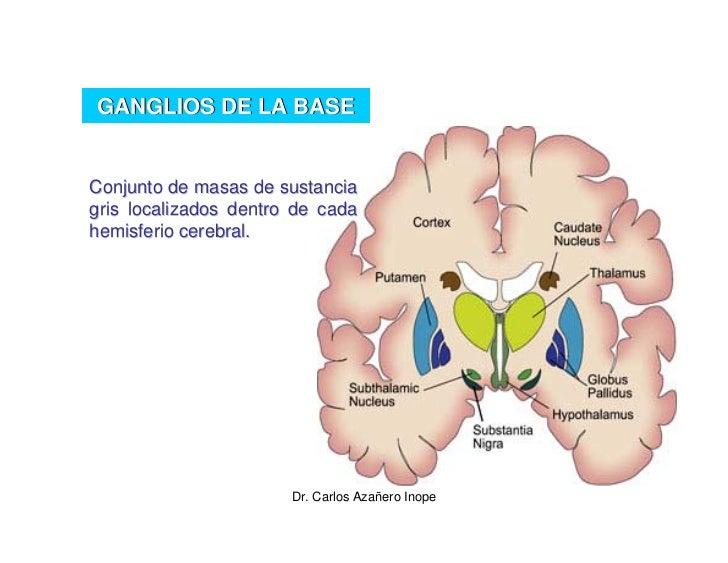 Excelente Grises Anatomía 2 Imágenes - Anatomía de Las Imágenesdel ...