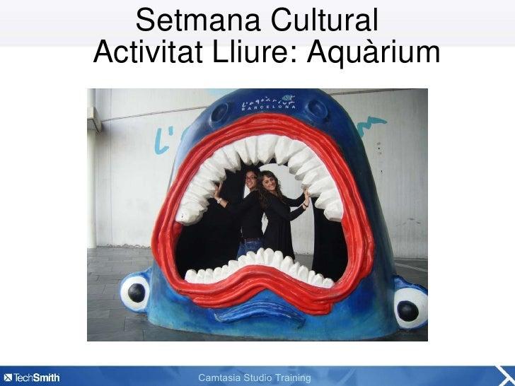 Setmana Cultural Activitat Lliure: Aquàrium