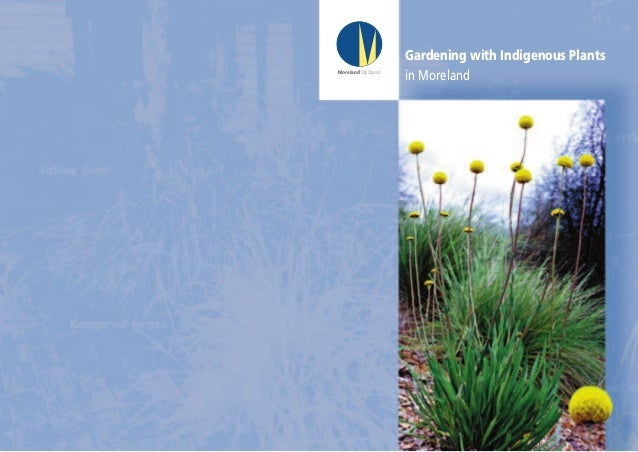 Gardening with Indigenous Plants in Moreland - Australia