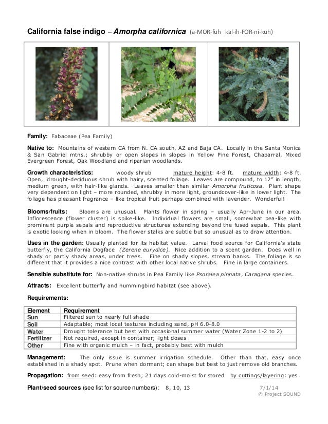 Gardening sheet   amorpha californica