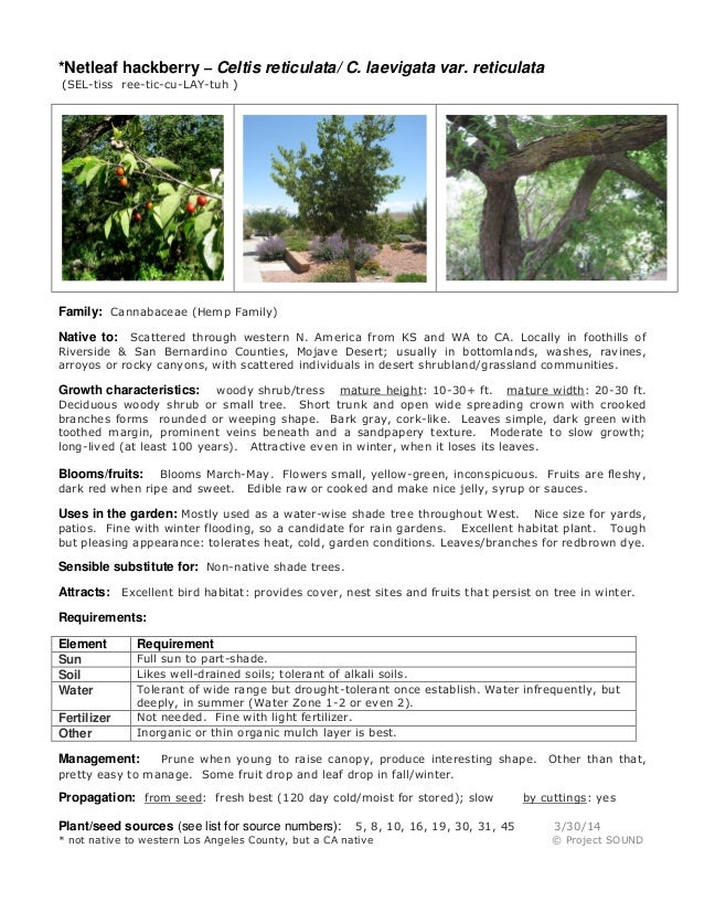 Gardening sheet   celtis reticulata