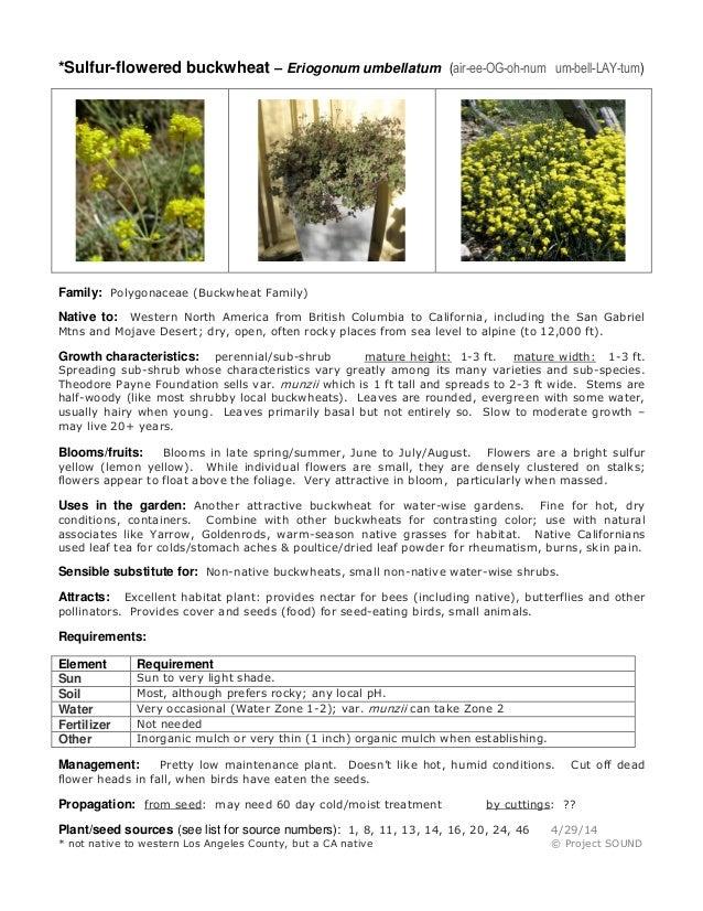 Gardening sheet   eriogonum umbellatum
