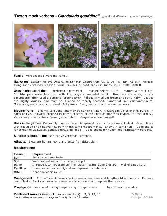 Gardening sheet   glandularia gooddingii