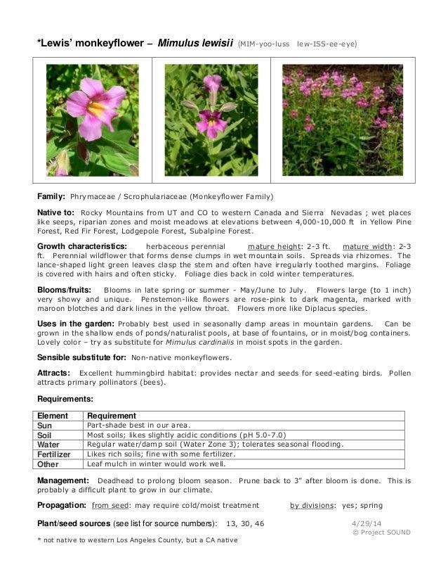 Gardening sheet   mimulus lewisii