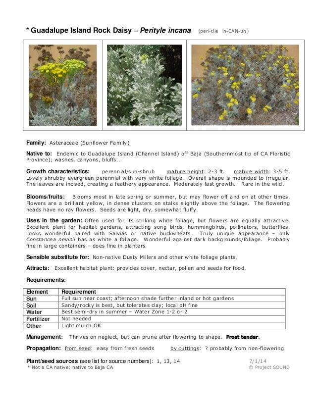 Gardening sheet   perityle incana