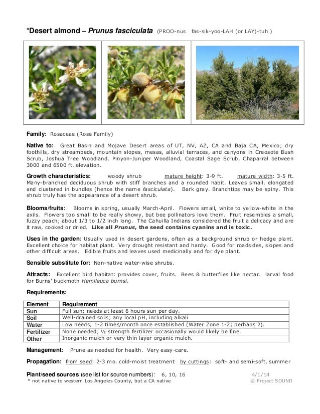*Desert almond – Prunus fasciculata (PROO-nus fas-sik-yoo-LAH (or LAY)-tuh ) Family: Rosaceae (Rose Family) Native to: Gre...