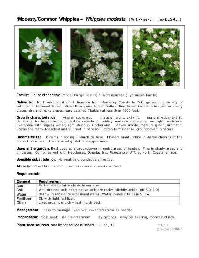 *Modesty/Common Whipplea – Whipplea modesta  ( WHIP-lee-uh  mo-DES-tuh)  Family: Philadelphaceae (Mock Orange Family) / Hy...