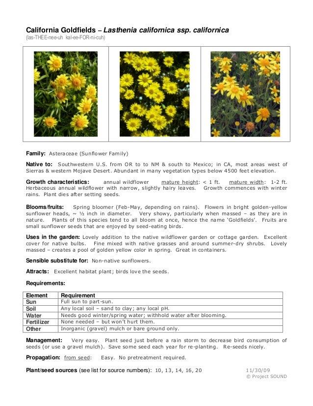 California Goldfields – Lasthenia californica ssp. californica (las-THEE-nee-uh kal-ee-FOR-ni-cuh)  Family: Asteraceae (Su...