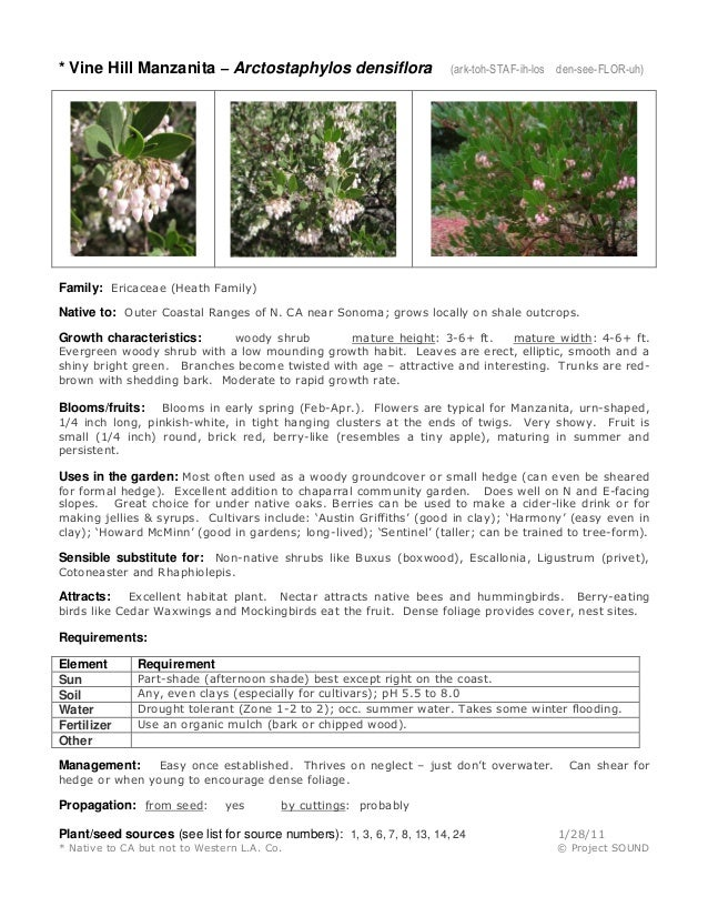 * Vine Hill Manzanita – Arctostaphylos densiflora (ark-toh-STAF-ih-los den-see-FLOR-uh) Family: Ericaceae (Heath Family) N...