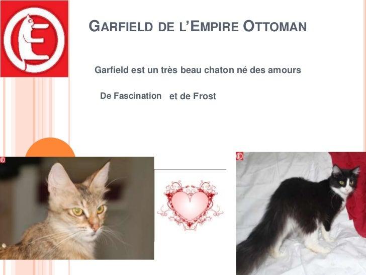 Garfield de l'Empire Ottoman<br />Garfield est un très beau chaton né des amours<br />De Fascination<br />et de Frost<br />