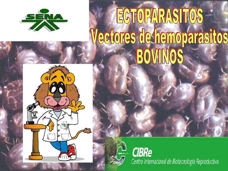 ECTOPARASITOS Vectores de hemoparasitos BOVINOS