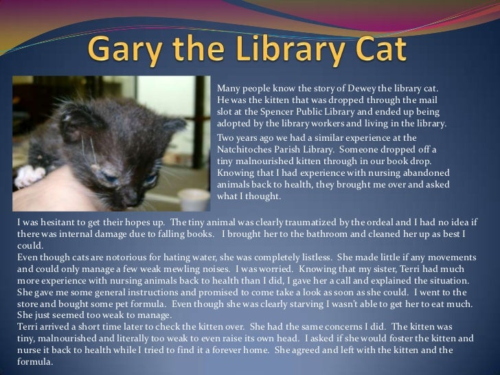 Many people know the story of Dewey the library cat.                                                He was the kitten that...