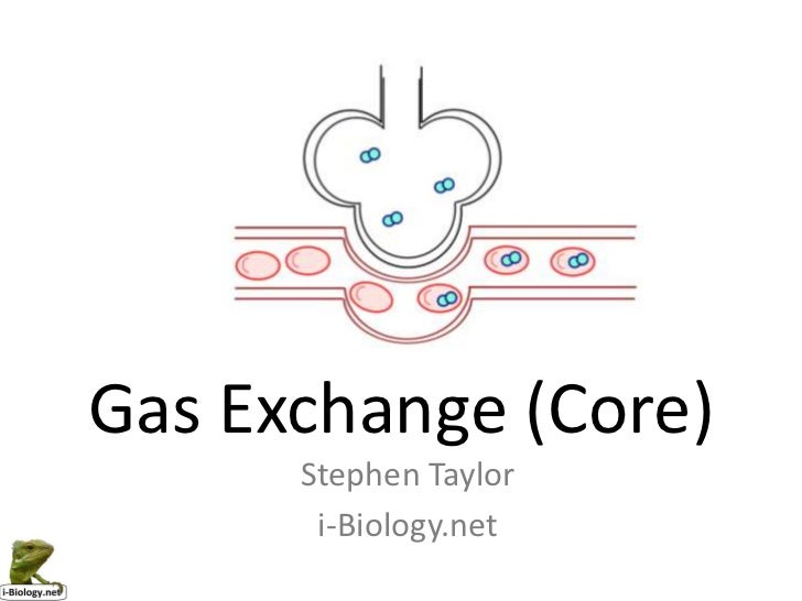 Gas Exchange (Core)
