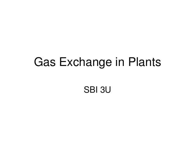 Gas Exchange in Plants SBI 3U