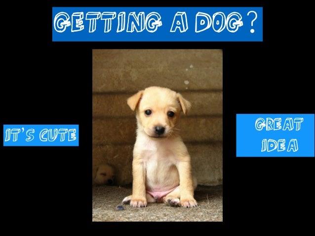 Getting a Dog? http://www.flickr.com/photos/sebastian-silva/4051599242/  It's Cute  Great Idea