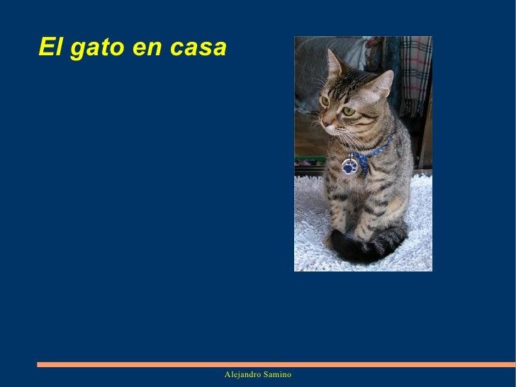 El gato en casa