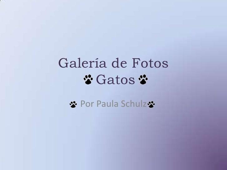 Galería de Fotos Gatos<br />Por Paula Schulz<br />