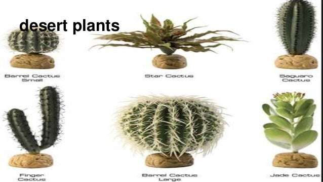 Images of desert plants with their names