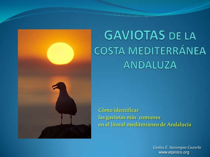 GAVIOTAS DE LA COSTA MEDITERRÁNEA ANDALUZA<br />Cómo identificar <br />las gaviotas más  comunes <br />en el litoral medit...