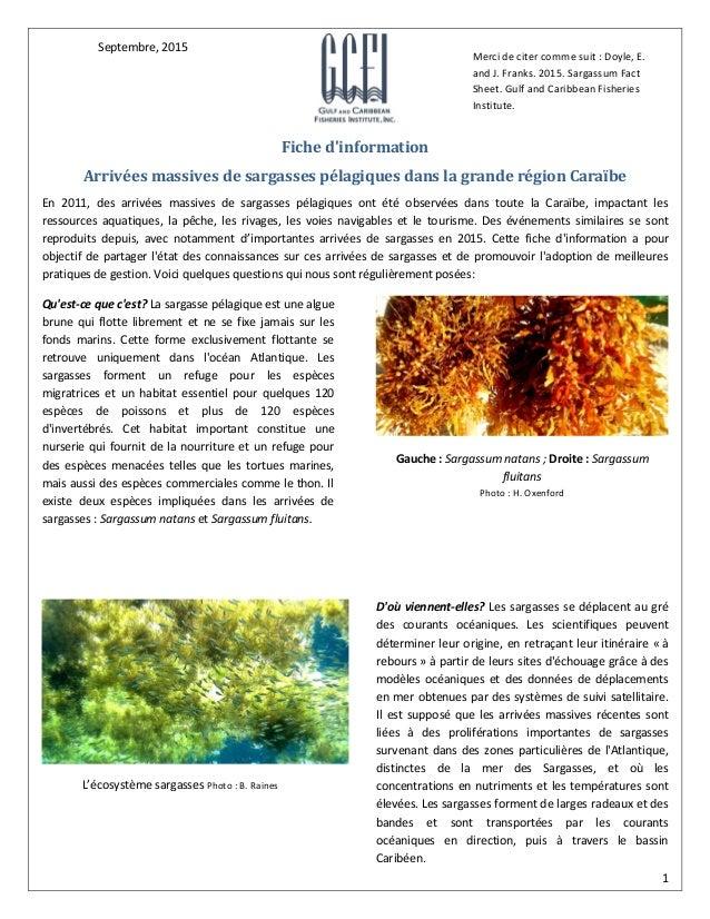 1 Fiche d'information Arrivées massives de sargasses pélagiques dans la grande région Caraïbe En 2011, des arrivées massiv...