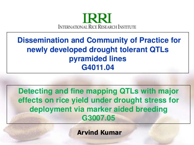 Arvind Kumar Dissemination and Community of Practice for newly developed drought tolerant QTLs pyramided lines G4011.04 De...