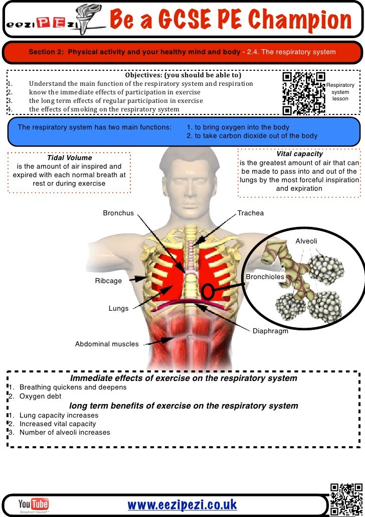 physical education circulatory system revision Vce biology unit 1 vce biology unit 2 vce physical education vce physical education unit 1  circulatory systemppt details download 162 kb.