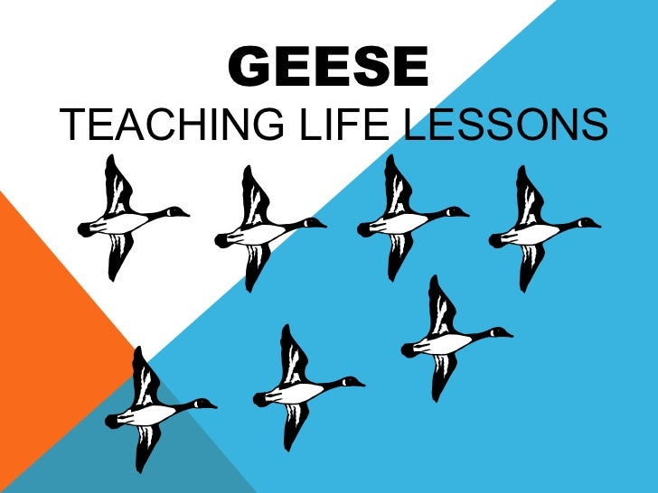 Geese - Teaching Life Lessons
