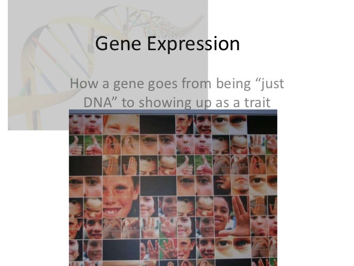 """Gene Expression<br />How a gene goes from being """"just DNA"""" to showing up as a trait<br />"""
