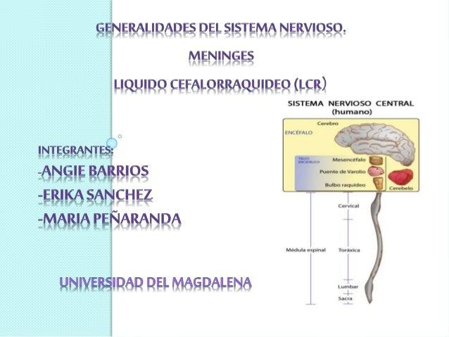  El sistema nervioso permite al cuerpo reaccionar a cambios continuos en sus ambientes internos y externos, controla e in...