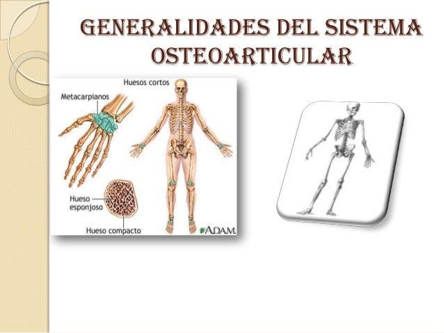 GENERALIDADES DEL SISTEMA OSTEOARTICULAR