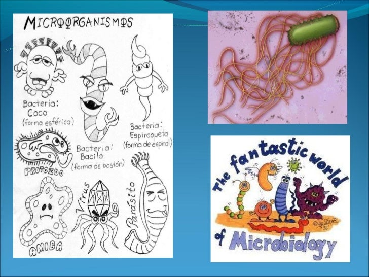 Definición de microbiología• Ciencia que estudia los seres vivos que no se  pueden ver a simple vista  – mikros (pequeño) ...