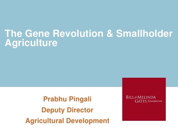 Gene revolution pingali 2010