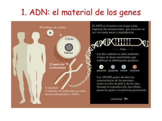 Genes e-ingenierc3ada-genc3a9tica