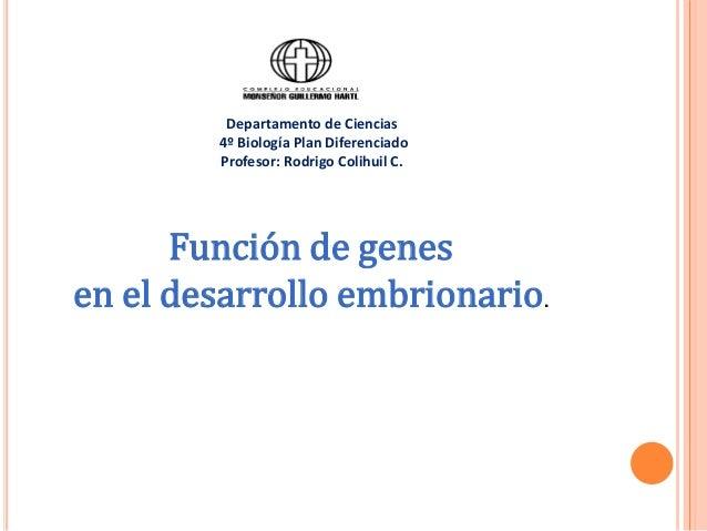 Función de genes en el desarrollo embrionario. Departamento de Ciencias 4º Biología Plan Diferenciado Profesor: Rodrigo Co...