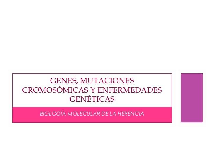Genes mutaciones cromosomicas_y_enfermedades_geneticas