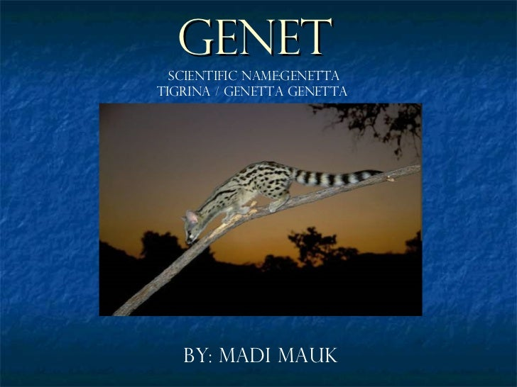 Genet By: Madi Mauk Scientific Name:Genetta Tigrina / Genetta Genetta