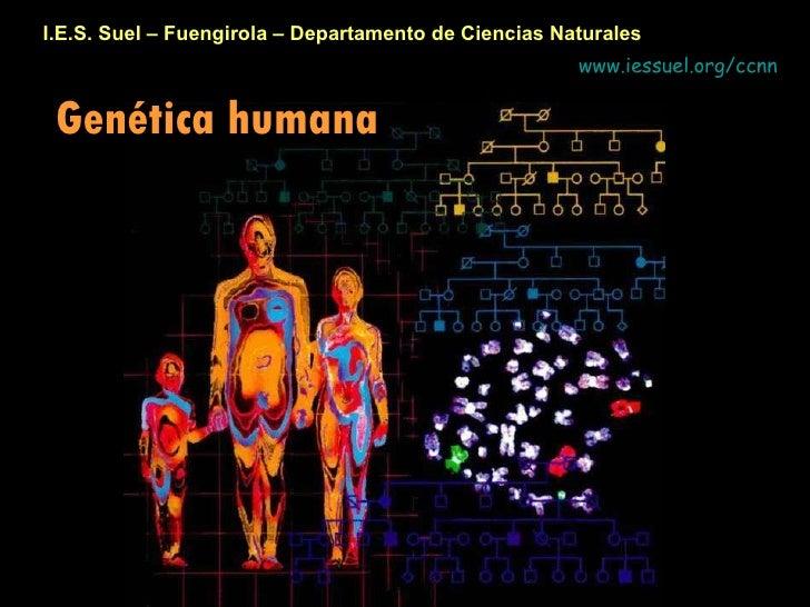 I.E.S. Suel – Fuengirola – Departamento de Ciencias Naturales Genética humana www.iessuel.org/ccnn