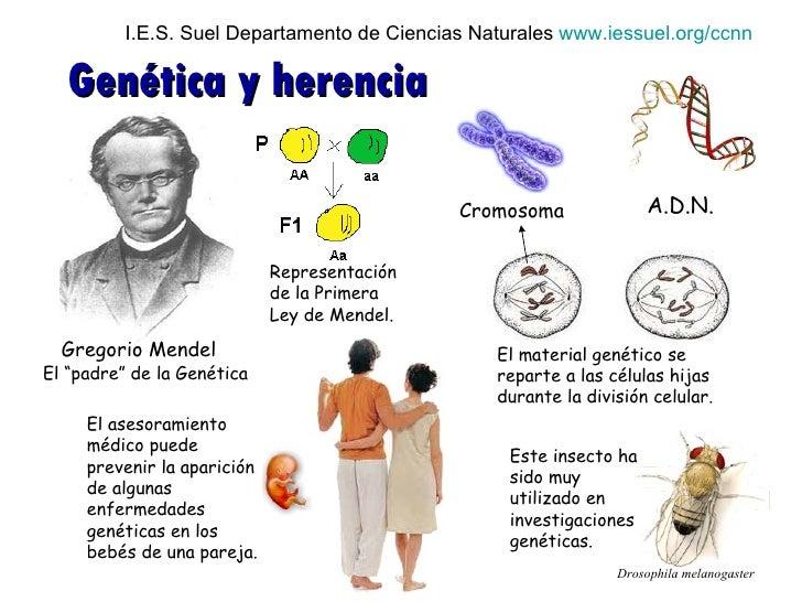 genetica mendeliana: