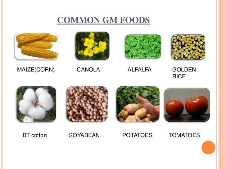the effects of genetically modified foods essay Read this essay on effects of genetically modified food on human come browse our large digital warehouse of free sample essays get the knowledge you need.