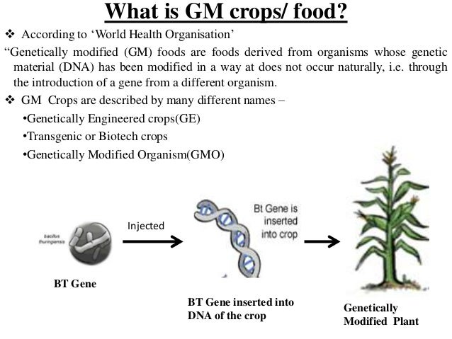 Essay on gm crops