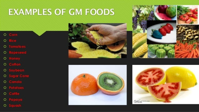 Example Organic Food Examples of gm Foods  Corn