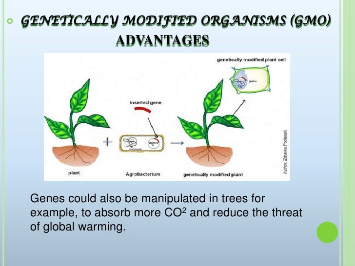 a discussion of the benefits of genetically modified organisms A lonely quest for facts on genetically modified thought a ban on genetically modified organisms was a chamber listened to a discussion about.