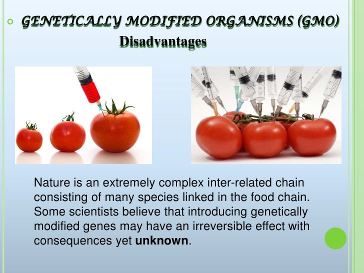 Persuasive Essay About Genetically Modified Food